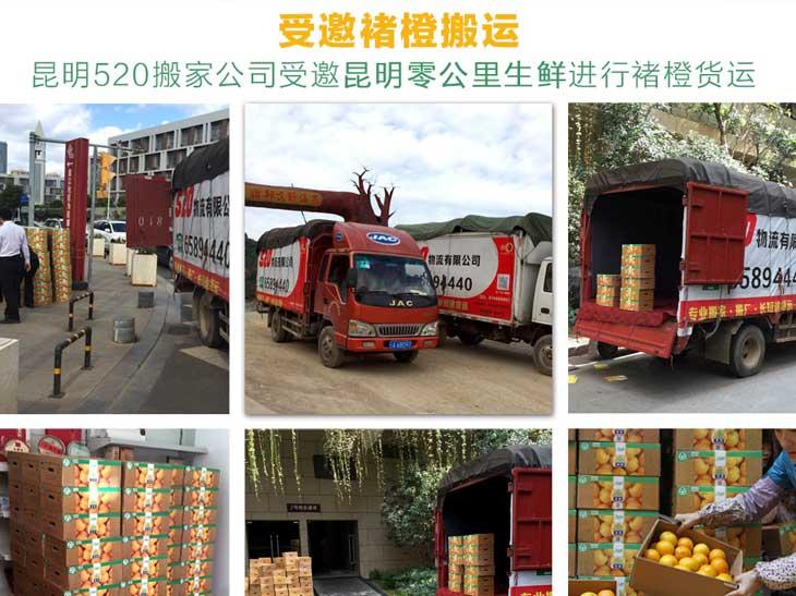 昆明520yabo官方网站公司受邀至褚时健基地空车搬运褚橙