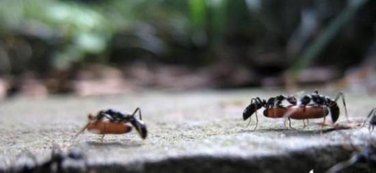 昆明蚂蚁yabo官方网站.jpg